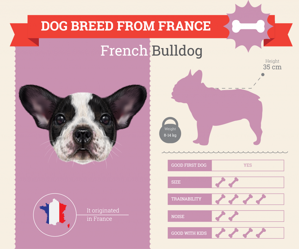 French Bulldog infographic