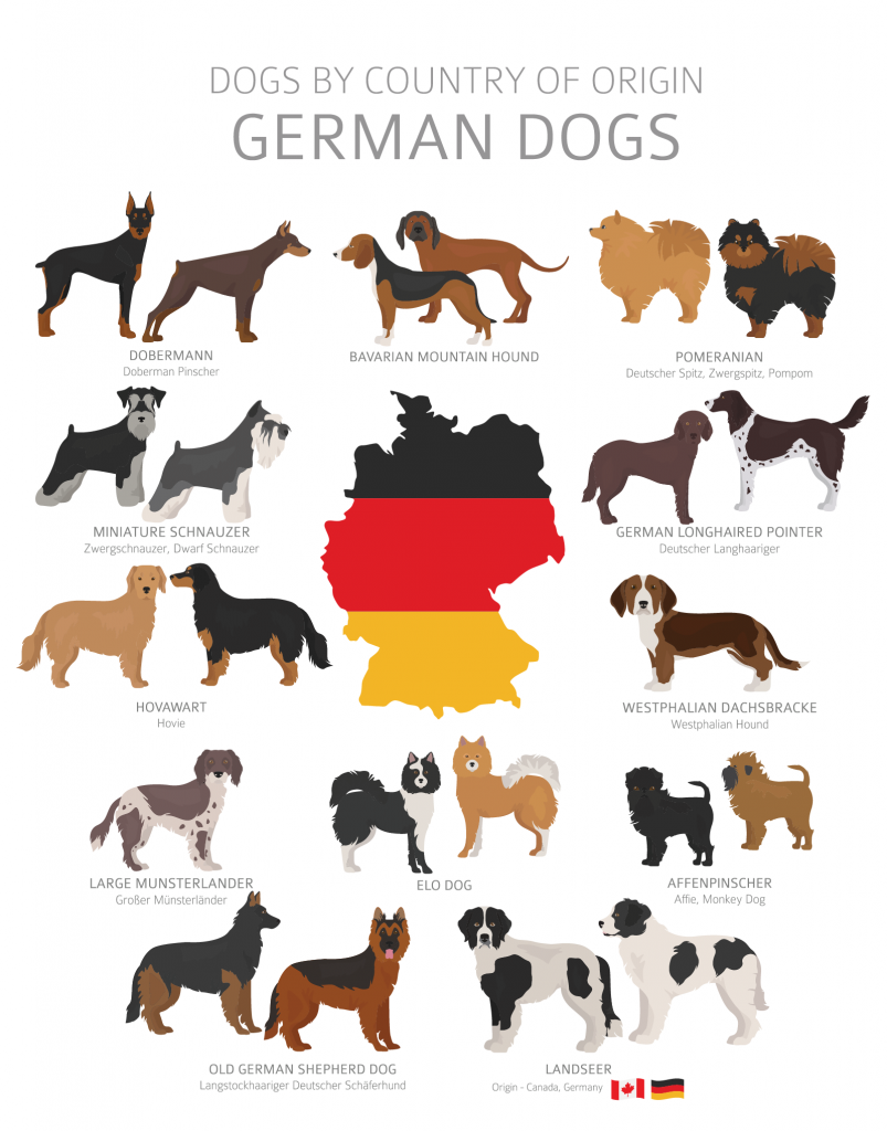 Illustration of german dog breeds