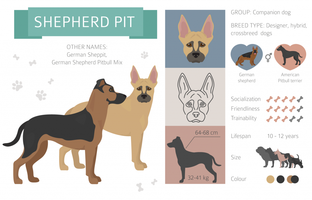 German Pit infographic