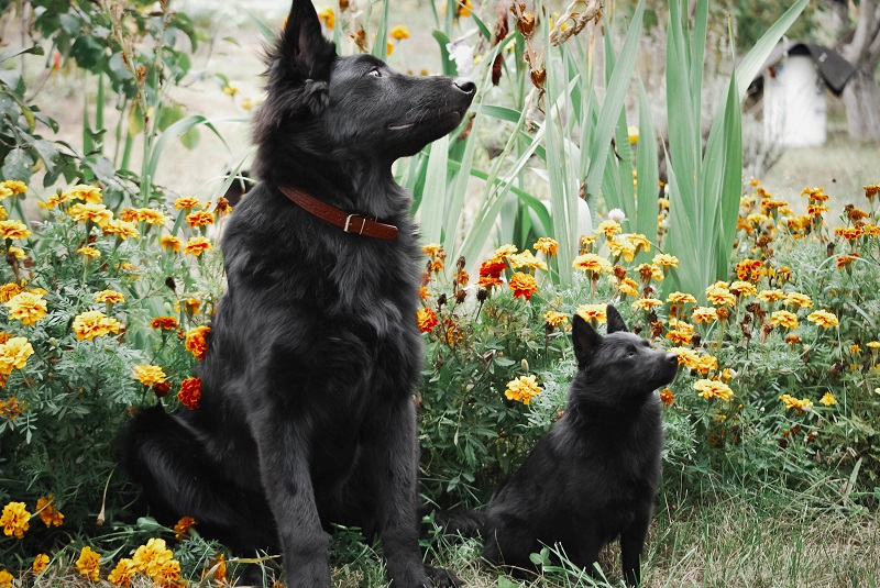 Big and small black dog sitting next to each other in garden