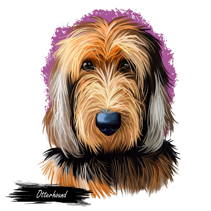 digital illustration of an Otterhound