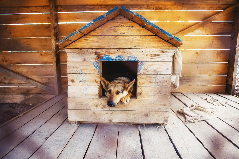dog watching out of his kennel