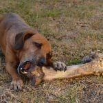 how to feed dog raw food diet on budget