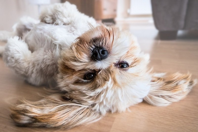 how to get rid of dog hair from air furniture and clothes