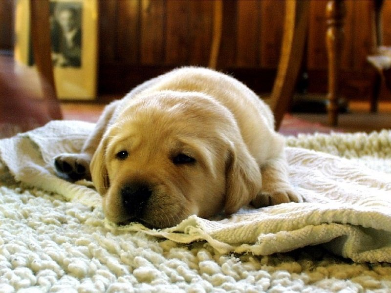 how to get rid of dog smells on couch