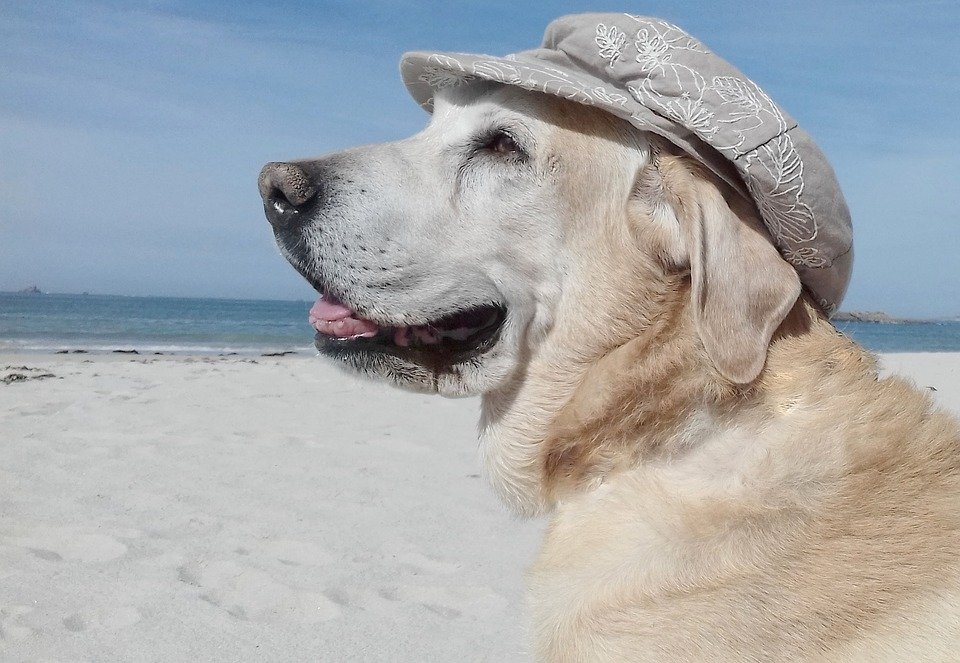 how to keep dog cool outside