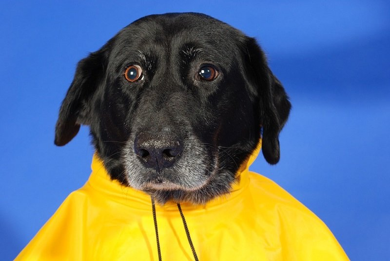 how to keep dog dry in rain