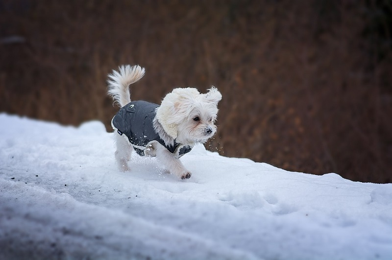 how to keep dog dry in snow and rain