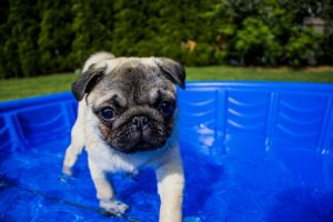 how to keep puppy cool in summer