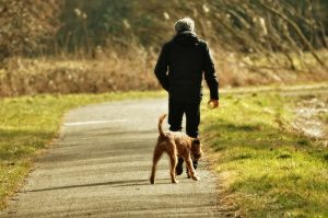 Walking Person Man With Dog People Dog Man man walking dog without leash or off lead