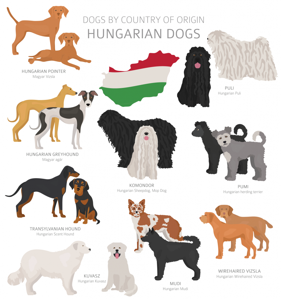 Illustration of Hungarian dog breeds