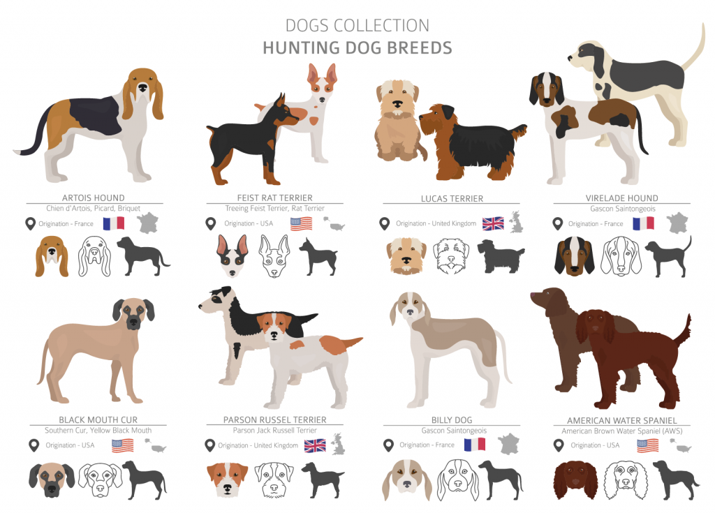 Overview of hunting dog breeds