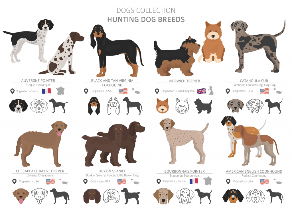 Illustration of hunting dog breeds