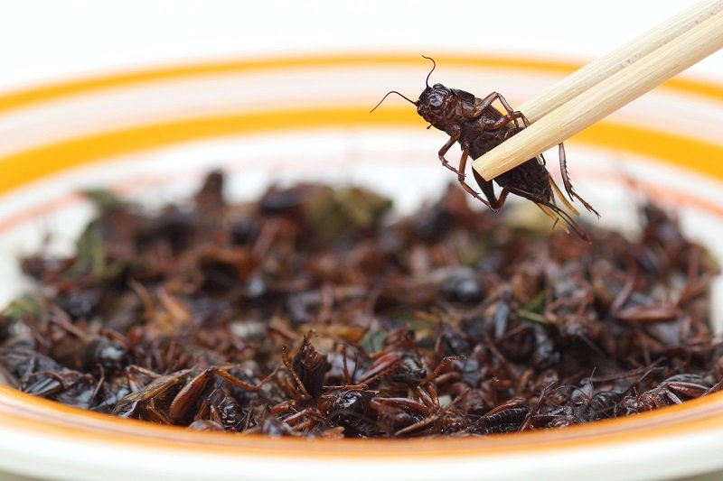 Insect picked up with wooden chop sticks