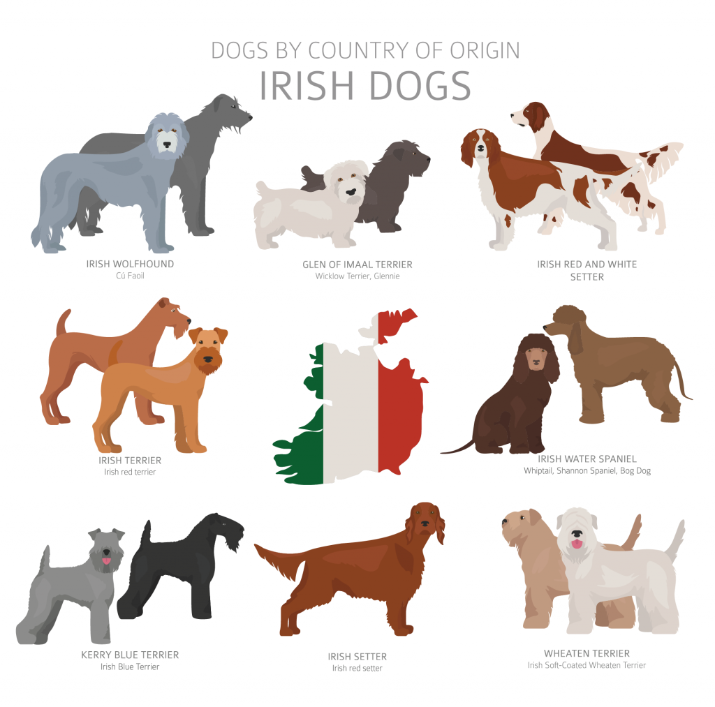 Illustration of Irish dog breeds