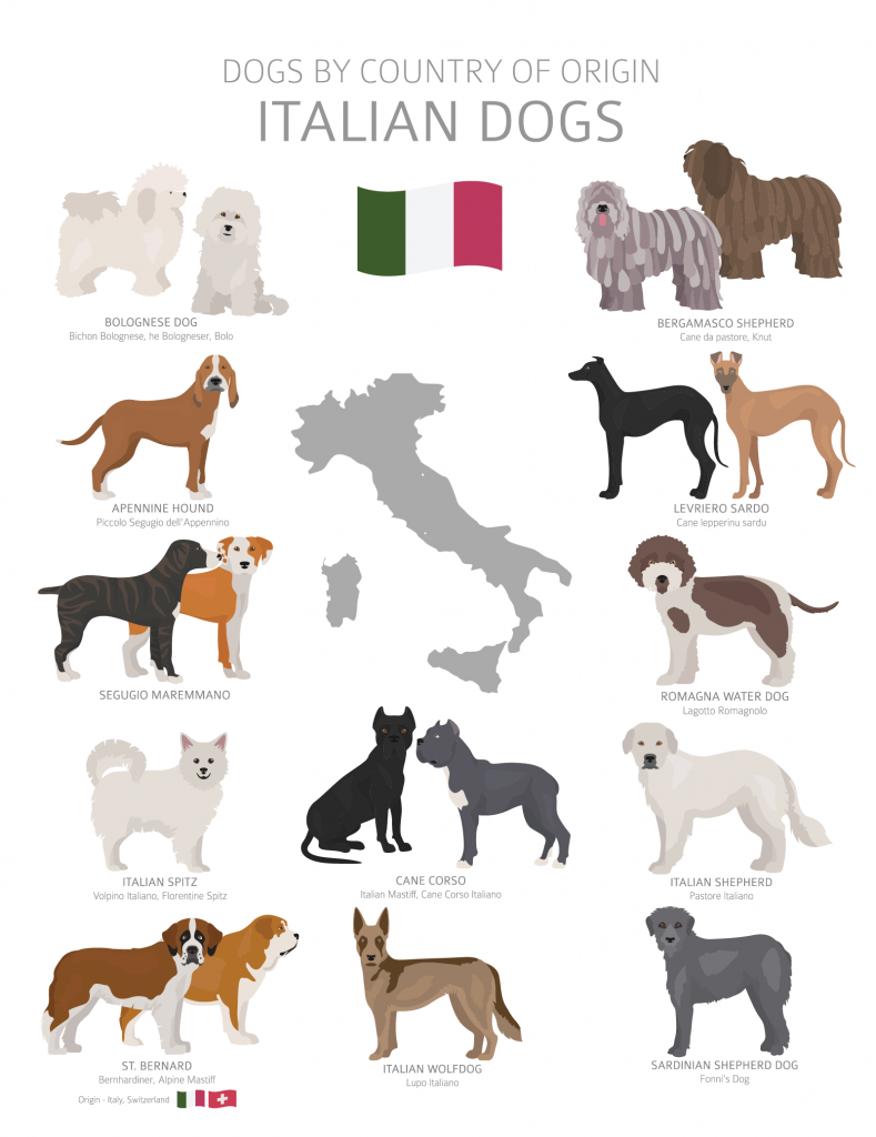 Overview of Italian dog breeds