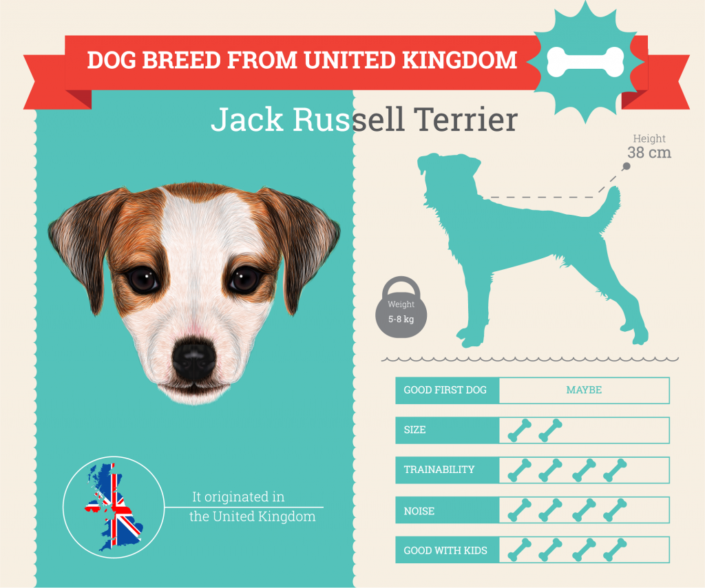 Jack Russell Terrier infographic
