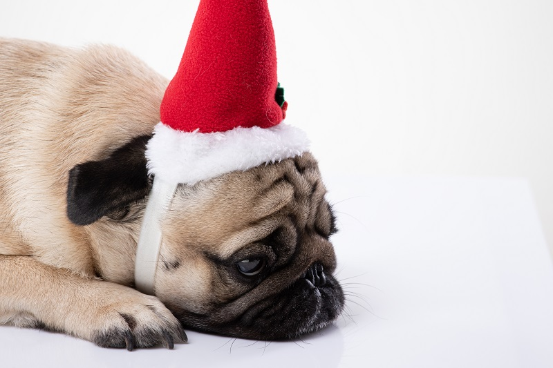 keeping pets safe in the Holidays