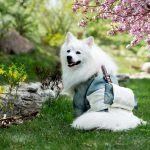 most-popular-dogs-japan