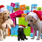 dogs in front of Christmas gifts