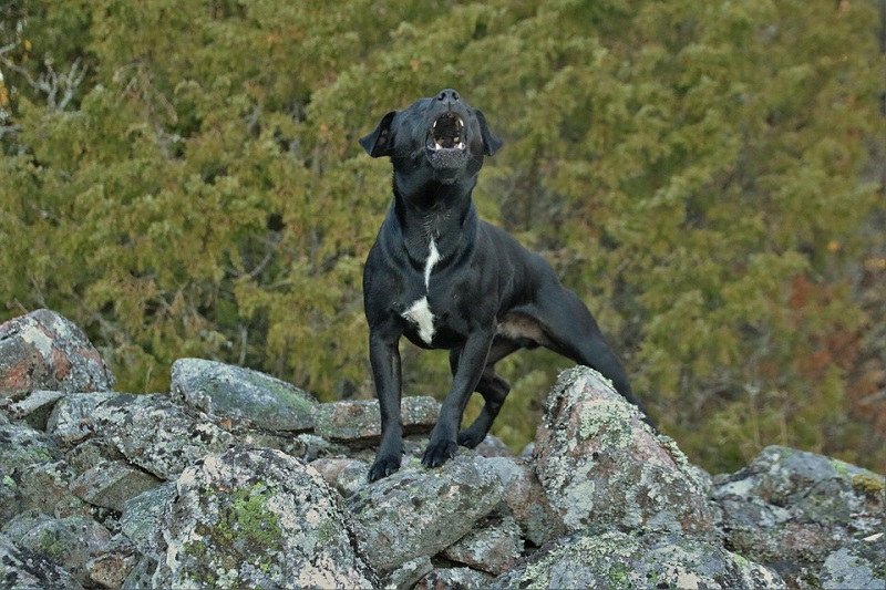 patterdale terrier on a mountain top