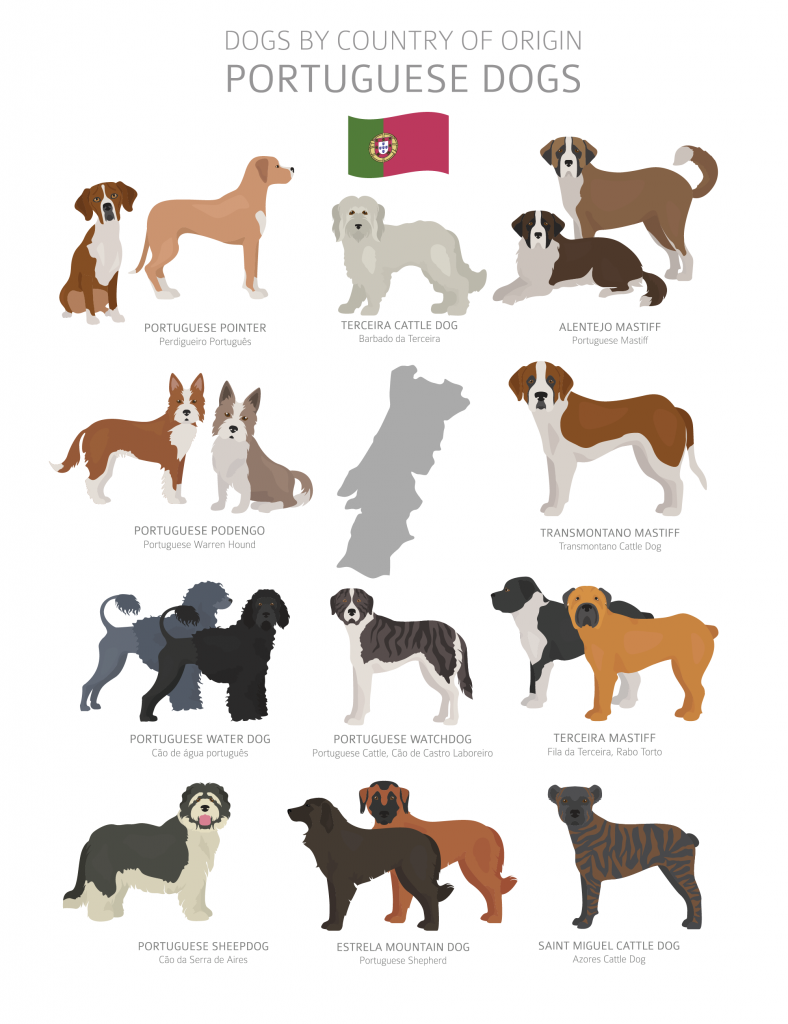 Illustration of Portuguese dog breeds