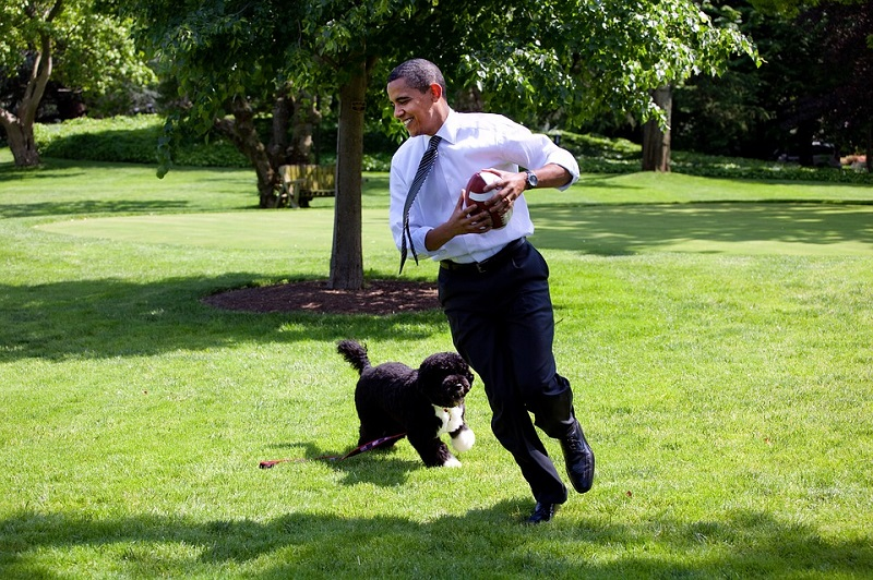 portuguese water dog Bo with Barrack Obama