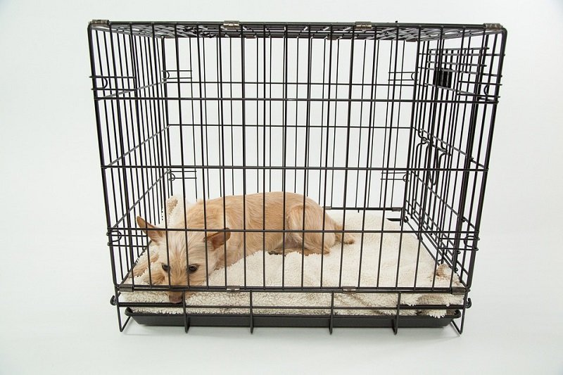 Puppy lying in closed crate