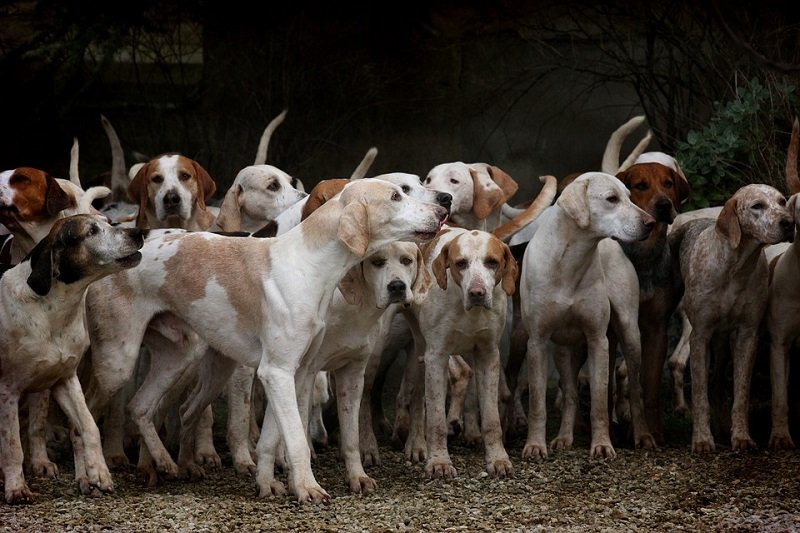 registered dog breeders
