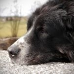 how to groom an older dog with arthritis