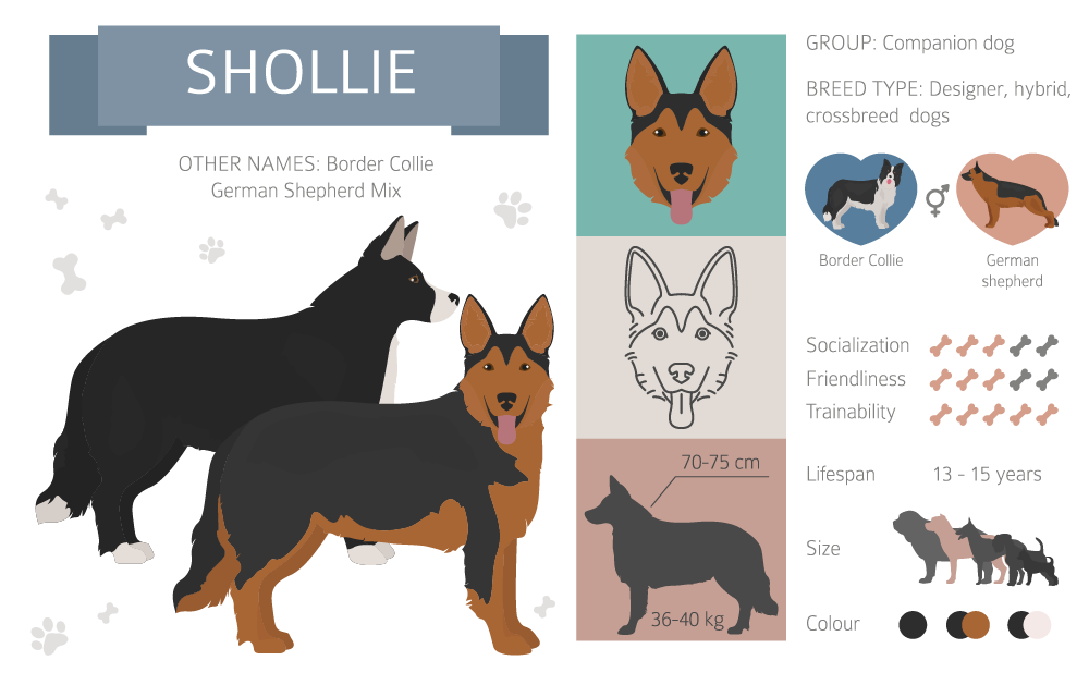 Shollie infographic