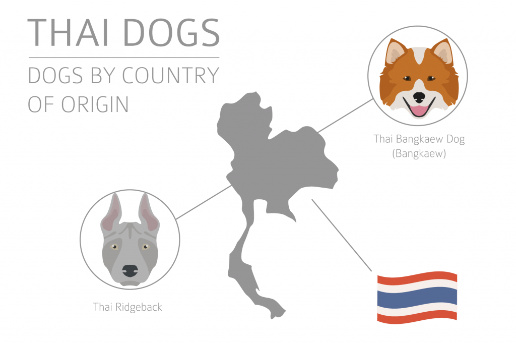 Illustration of Thai dog breeds
