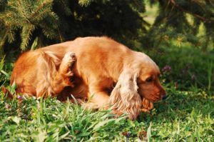tick prevention products which one to choose for your dog