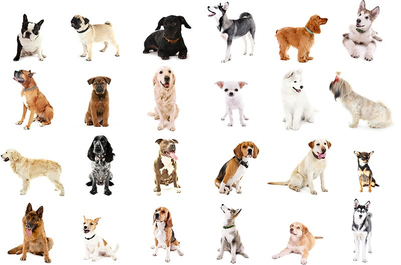 Dog Breed List The Ultimate Of Breeds
