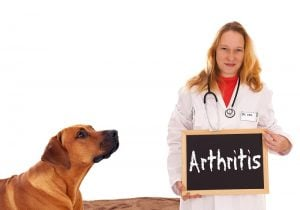 dog with a vet and sign saying arthritis