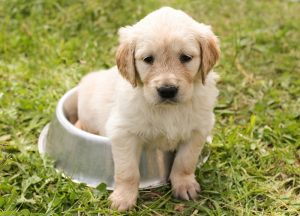 what is a puppy starter kit