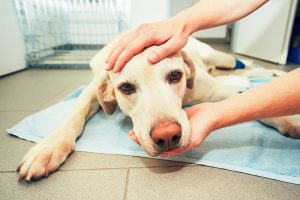 ill dog with kidney disease