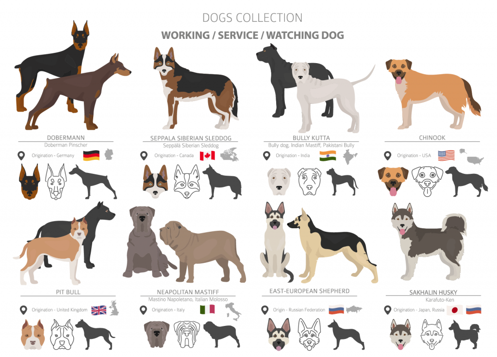 Illustration of working, service and watch dog breeds